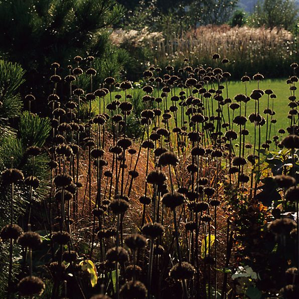 Acres Wild Country Contemporary Plant Seed heads