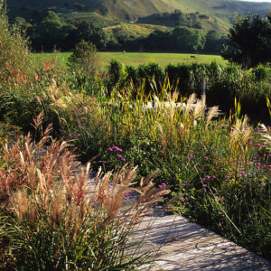 Acres Wild Country Contemporary Soft Grasses