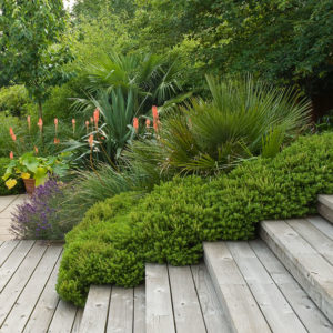 Acres Wild Form and Foliage decking steps