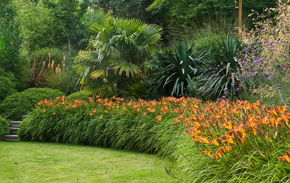 Acres Wild Form and Foliage Mass of Lilies
