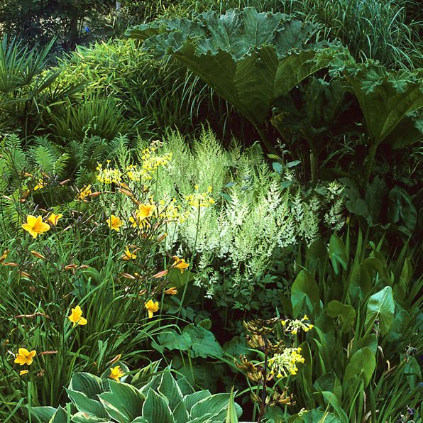 Acres Wild Lush and Luxuriant Iris