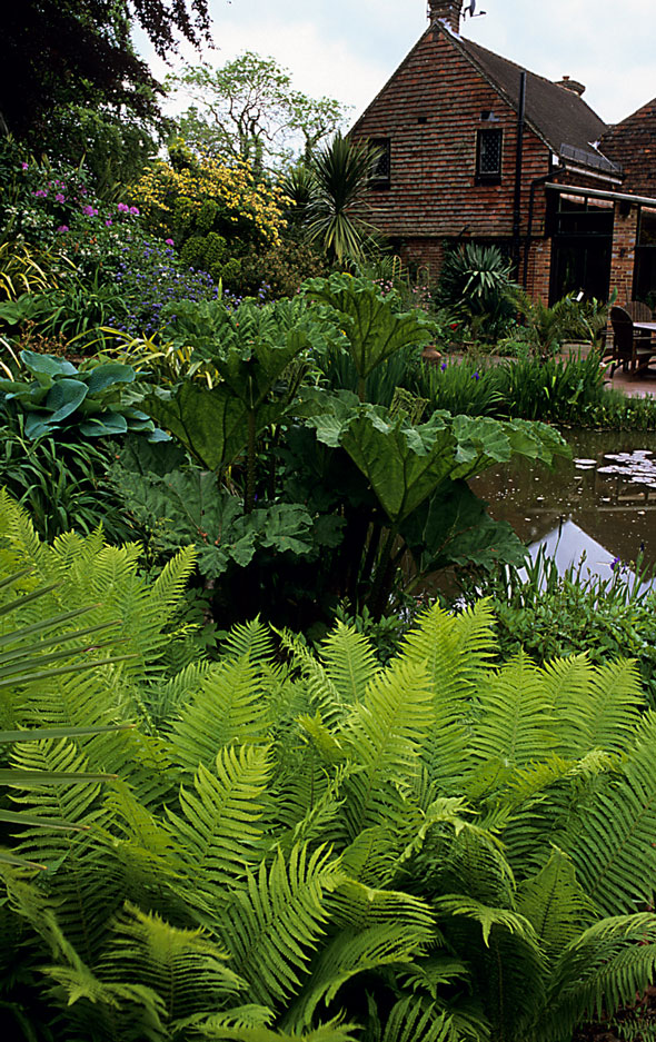 Acres Wild Lush and Luxuriant Ferns