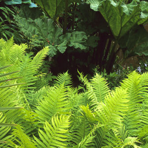 Acres Wild Lush and Luxuriant Foliage