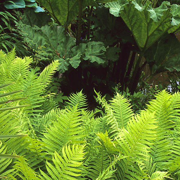Acres Wild Lush and Luxuriant Foliage