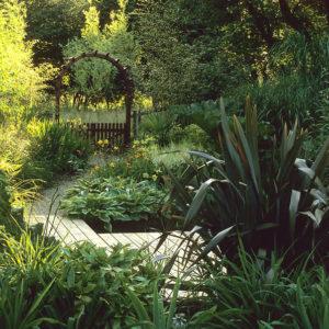 Acres Wild Lush and Luxuriant Phormium