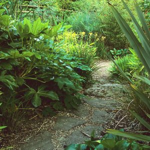 Acres Wild Lush and Luxuriant Planting