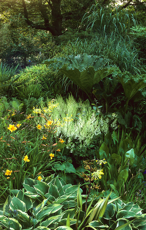 Acres Wild Lush and Luxuriant Iris