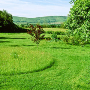 Acres Wild Meandering Meadow Grass