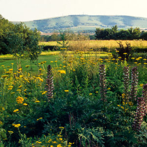Acres Wild Meandering Meadow View