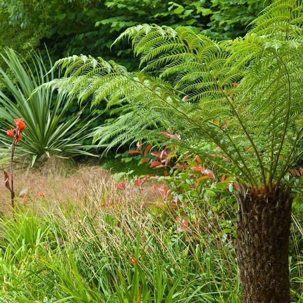 Acres Wild Poolside Planting Tree Fern