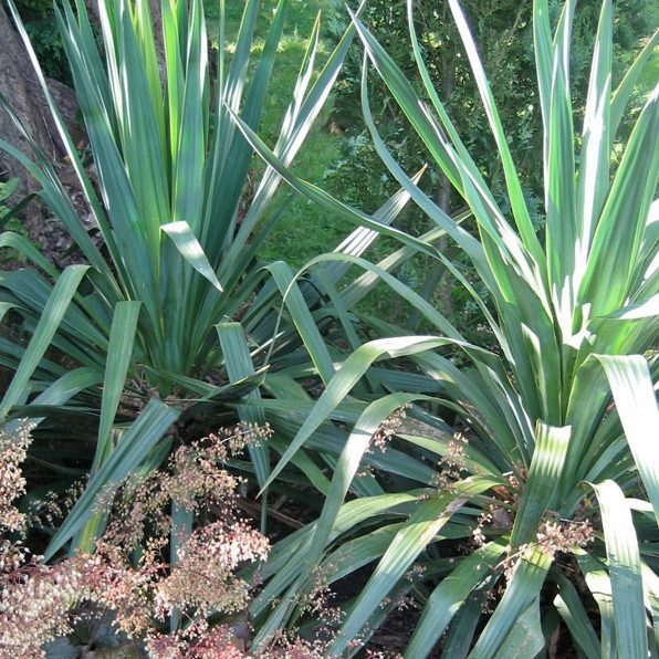 Acres Wild Poolside Planting Yucca