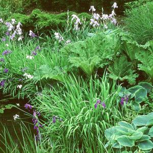 Acres Wild Surrey Garden Planting