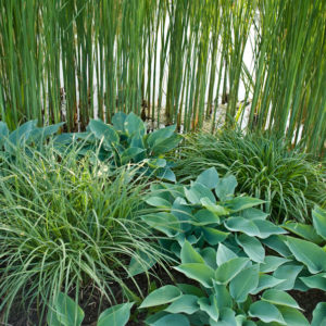 Acres Wild Willows and Water Hostas