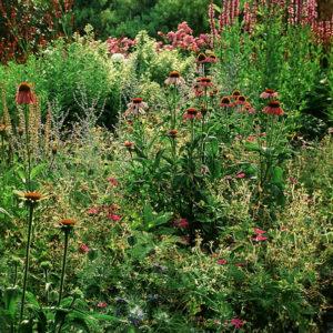 Acres Wild Perennial Pastures Mixed Perennial