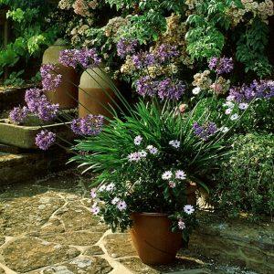 Acres Wild Perennial Pastures Pot Plant