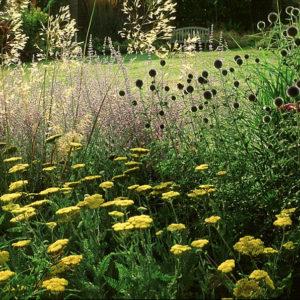 Acres Wild Perennial Pastures Stipa