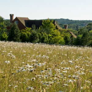 Acres Wild Traditional Terraces Meadow