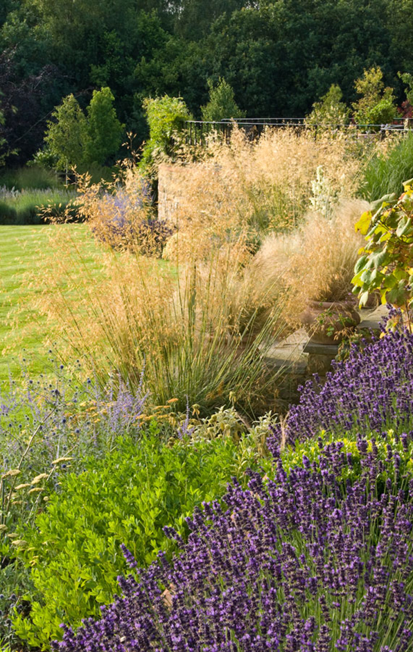 Acres Wild Traditional Terraces Stipa