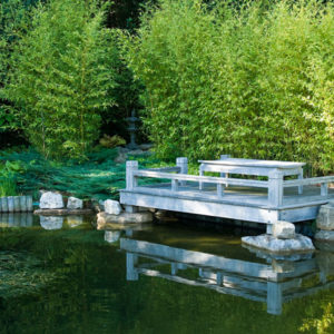 Acres Wild Ways with Water Decking