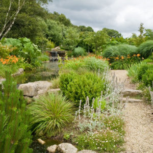 Acres Wild Ways with Water Perennials