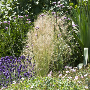 Acres Wild Bright'n Breezy Perennials