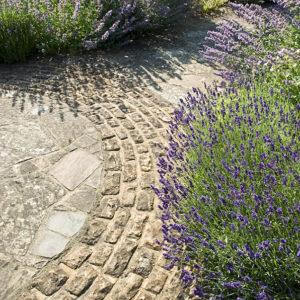 Acres Wild Edwardian Elegance Lavender