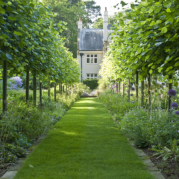 Acres Wild Edwardian Elegance Limes Trees