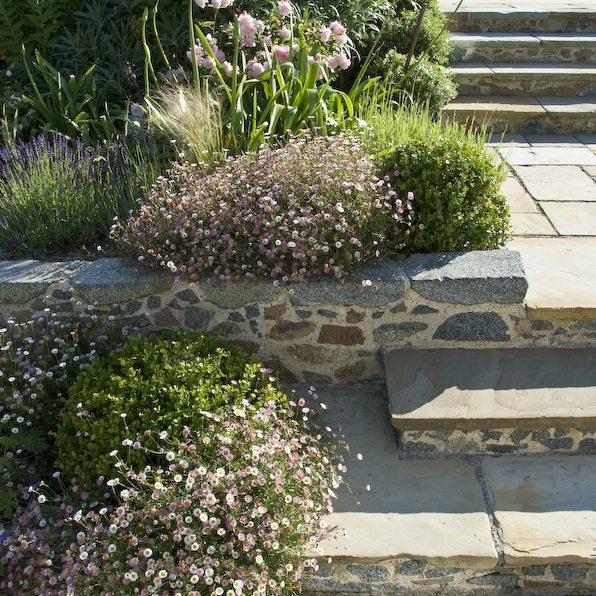 Acres Wild Guernsey Garden Erigeron