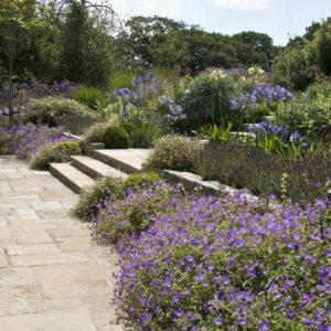 Acres Wild Guernsey Garden Geranium
