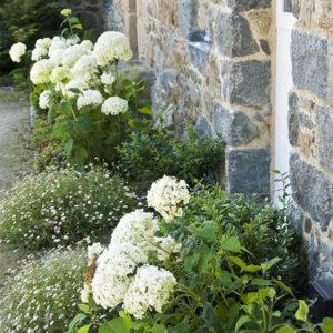 Acres Wild Guernsey Garden Hydrangea