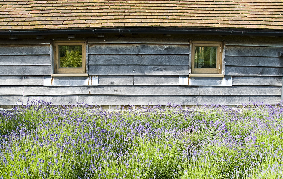 Acres Wild Rural Retreat Lavender