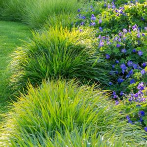 Acres Wild Surrey Serene Grasses