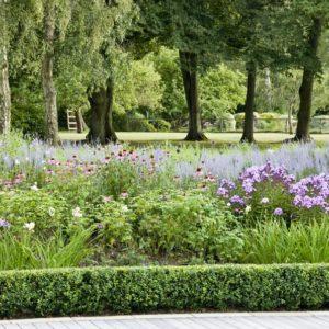 Acres Wild Surrey Serene Plants
