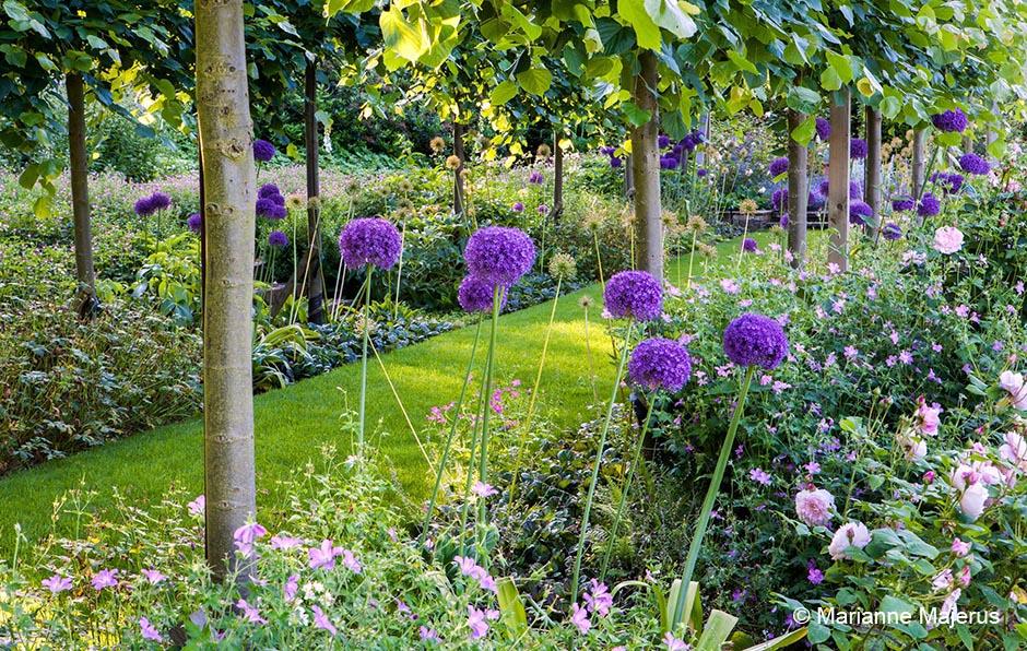 Acres Wild Edwardian Elegance Alliums