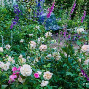 Acres Wild Edwardian Elegance Foxgloves