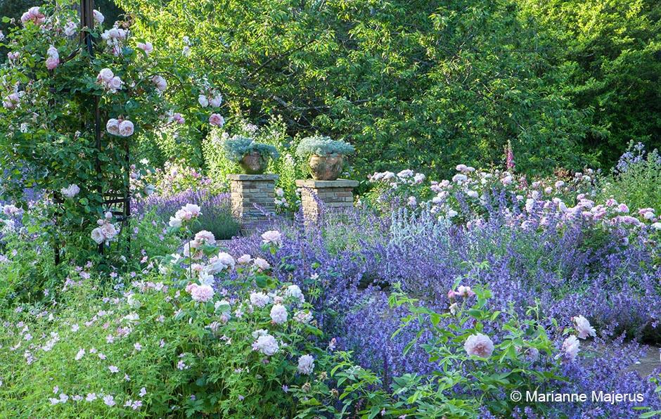 Acres Wild Edwardian Elegance Herbaceous