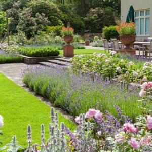 Acres Wild Edwardian Elegance Shrubs