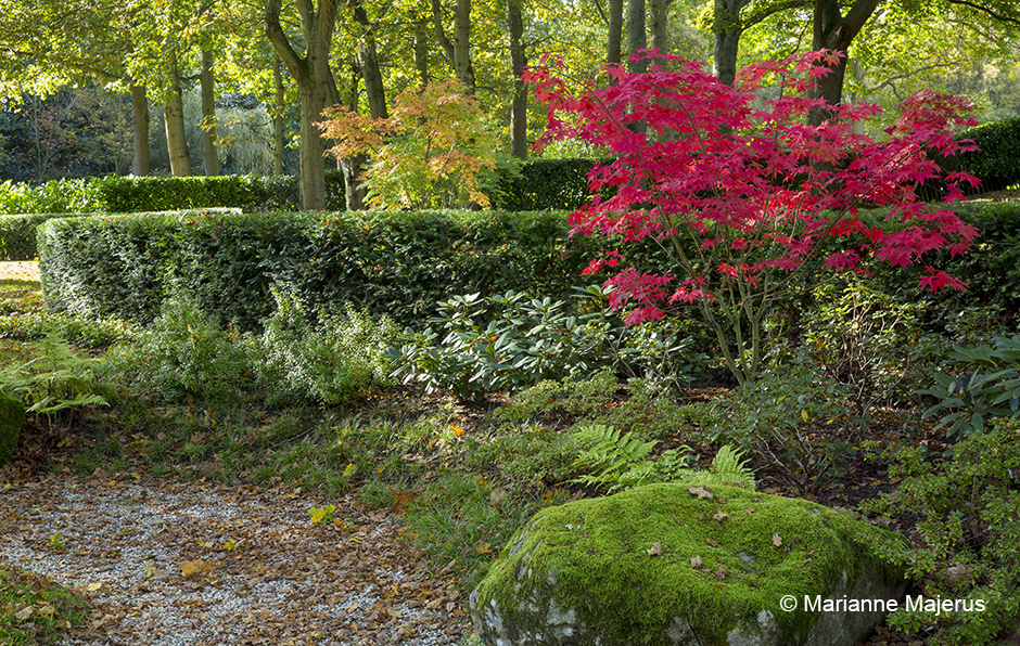 Acres Wild Garden in Glade Yew and Acer