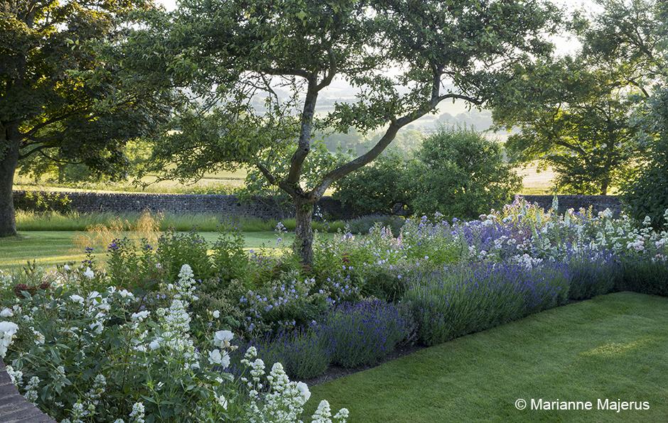 Acres Wild Lavender and Valerian