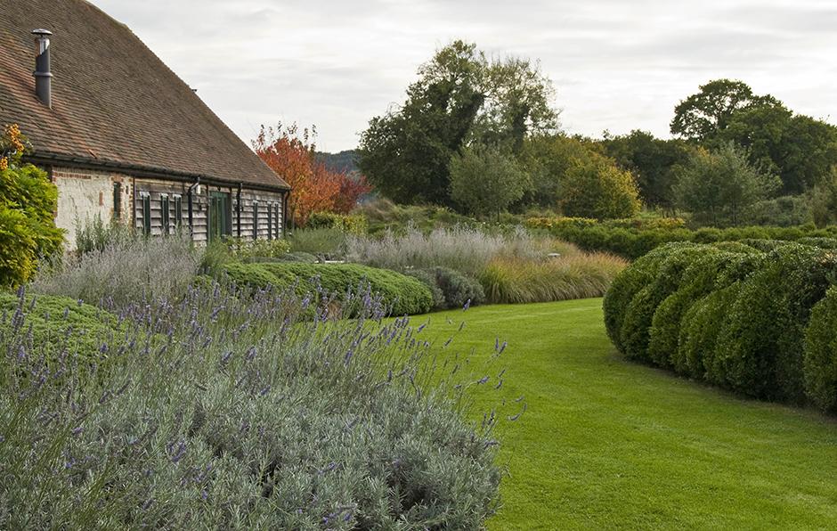 Acres Wild Lavender near lawn