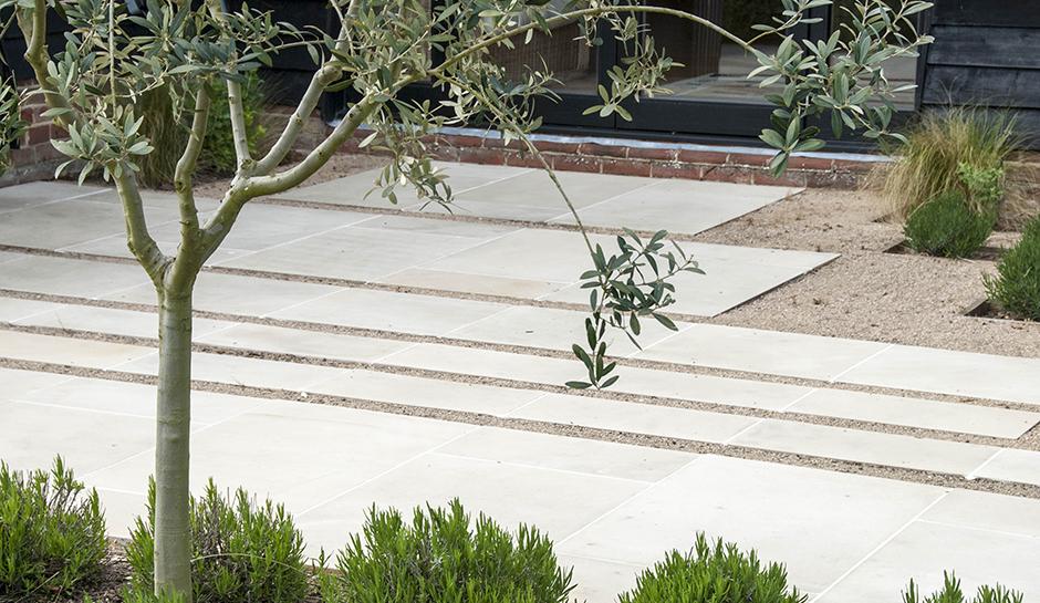 Acres Wild Olive Tree