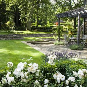 Acres Wild White Roses
