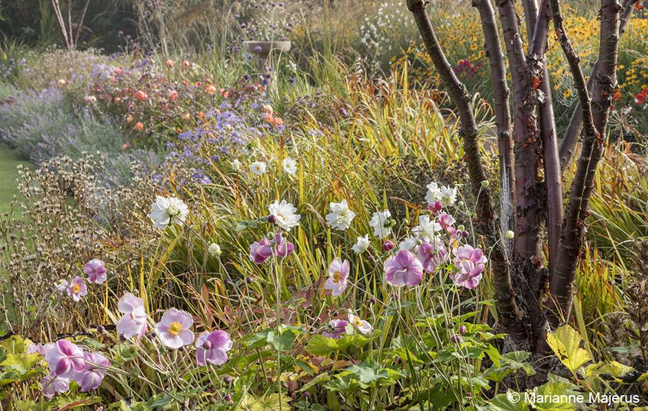 Acres Wild Stylishly Surrey Anemone