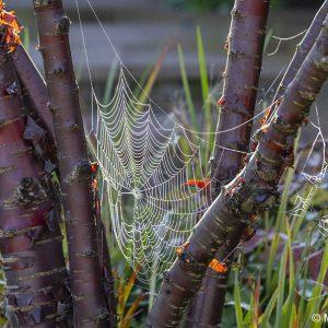 Acres Wild Stylishly Surrey Cobweb