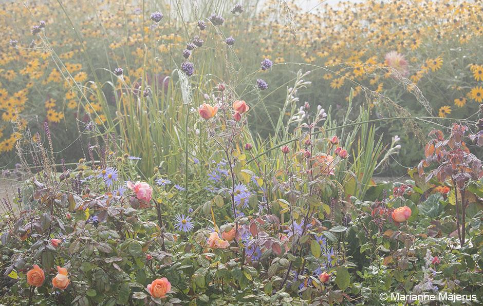 Acres Wild Stylishly Surrey Roses