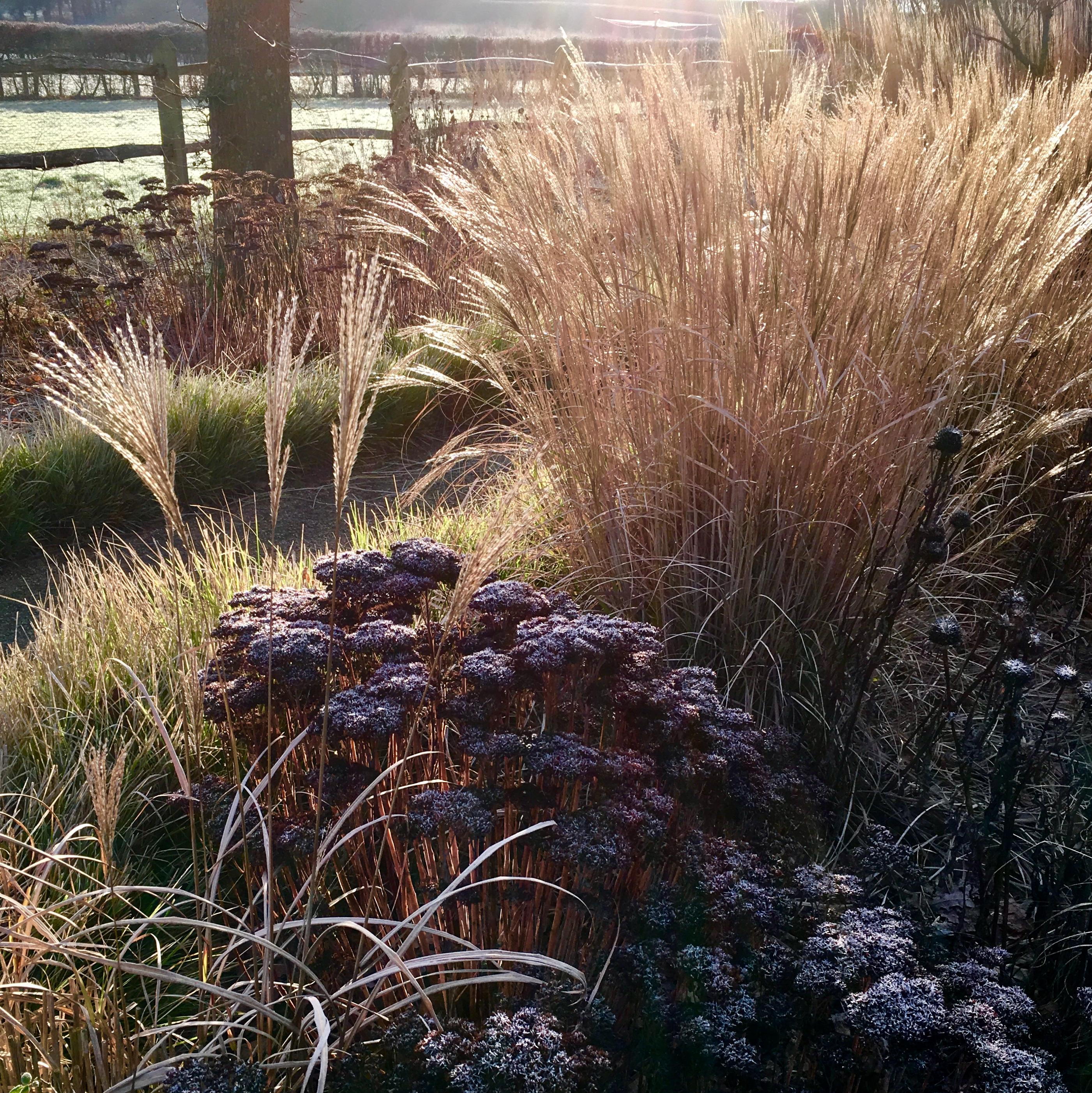 Acres Wild Artfully Accessible Sedum and Grasses