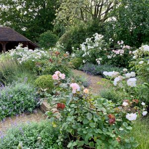 Acres Wild Isolated Idyll Mixed Roses Planting