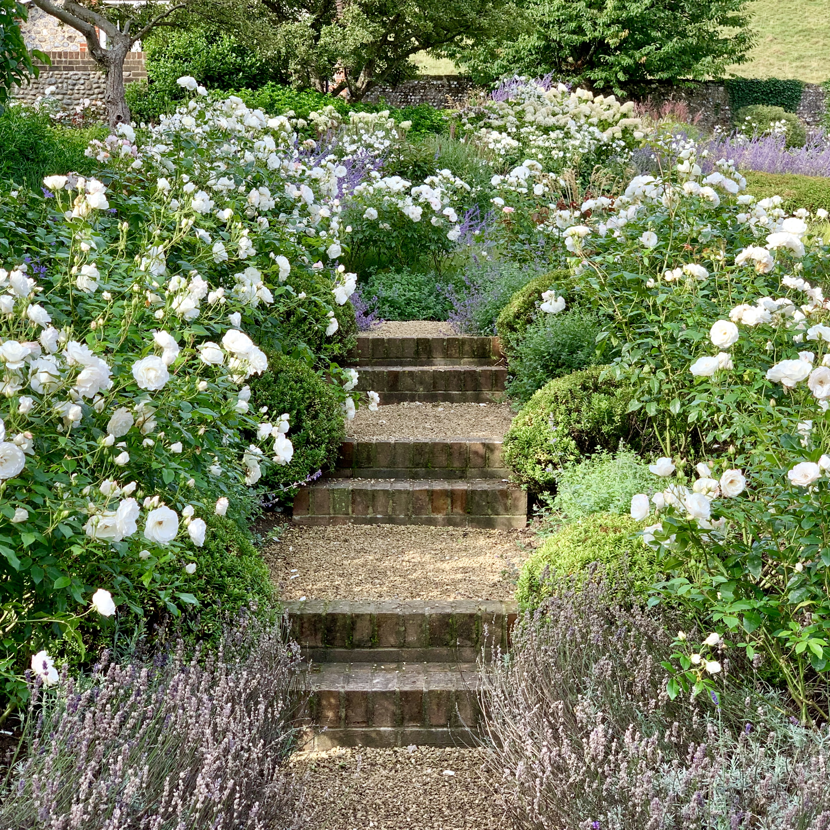 Acres Wild Isolated Idyll Steps with Roses