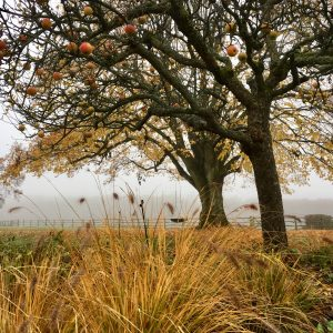 Acres Wild Surrey Serene Apple Tree in Autumn