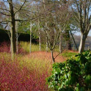 Acres Wild Surrey Serene Dogwoods in Winter